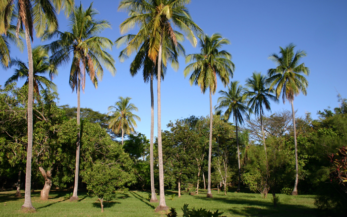 Palms in Yard